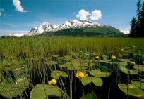 grayling-lake-trail-91832-ga