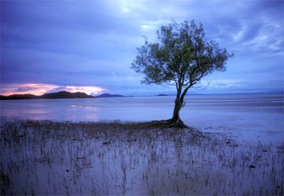 lone-mangrove-504165-ga