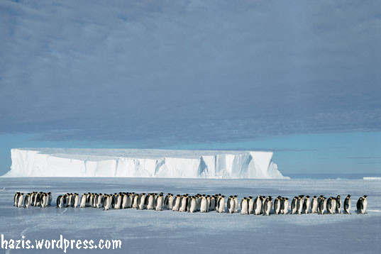 hidupan di kutub selatan unterpinguinen