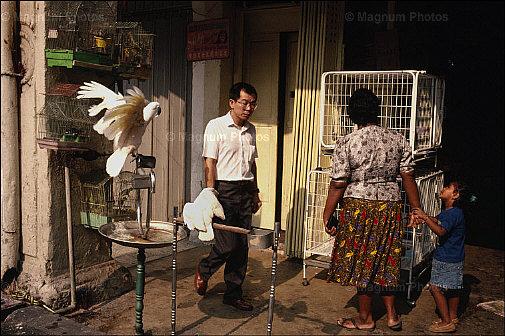 34. 1990 – Kedai burung di Jalan Sultan, Chinatown